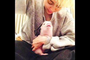 Miley Cyrus et son cochon