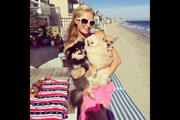 Paris Hilton et ses chiens