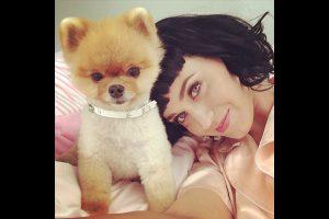 Katy Perry a un chat comme compagnon de toujours