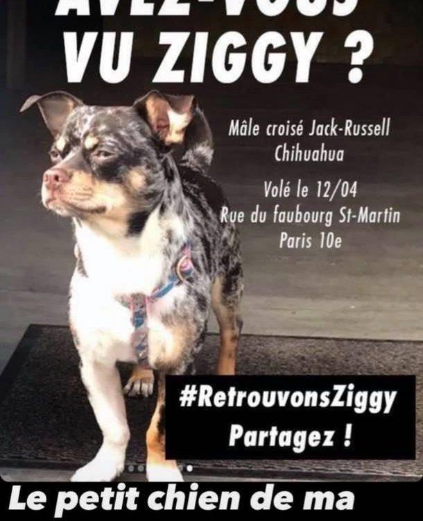 Ziggy, le chien volé à paris